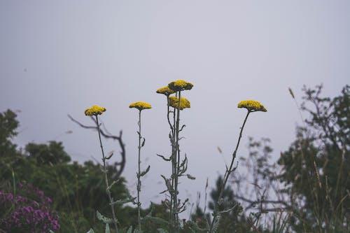 Ilmainen kuvapankkikuva tunnisteilla #herbs #nature