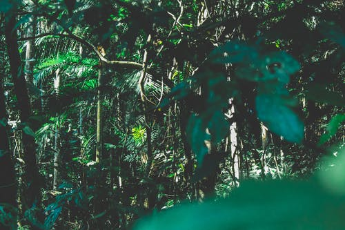Darmowe zdjęcie z galerii z brazylia, drzewa, dżungla, gałęzie