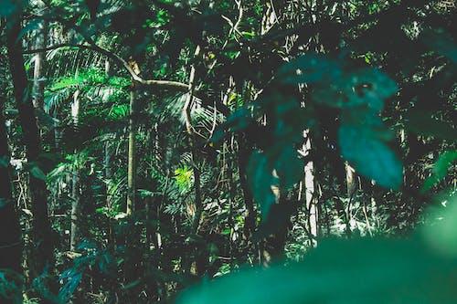 Gratis stockfoto met bomen, Bos, bossen, Brazilië