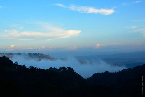 Photos gratuites de arbres, au-dessus des nuages, bleu, brouillard