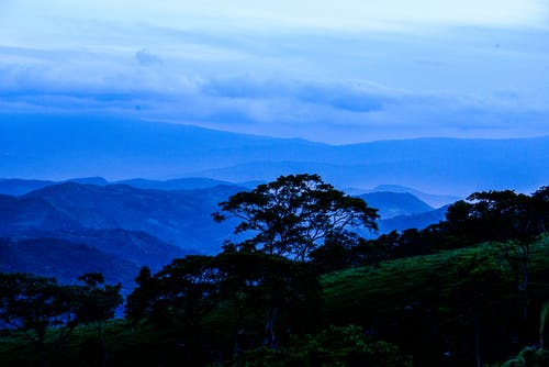 Photos gratuites de arbres, bleu, brouillard, brumeux