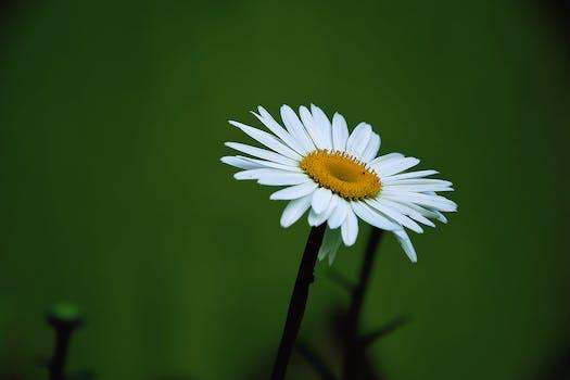 White and yellow flower free stock photo yellow and white daisy flower mightylinksfo