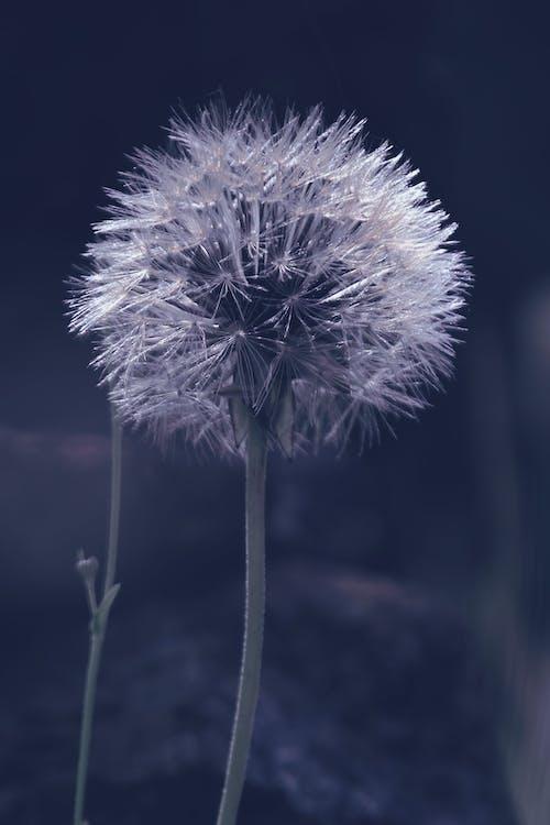 宏觀, 白色的花, 細節 的 免費圖庫相片