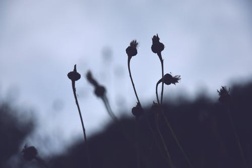 Free stock photo of contrast, dandelion, details