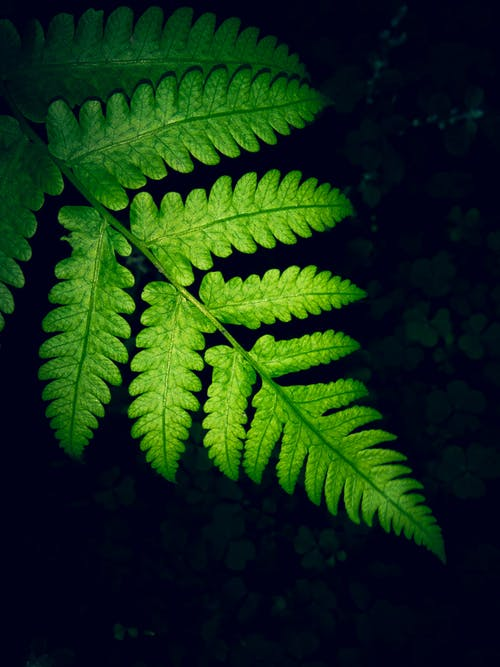 Close-up Photo Of Green Fern Leaf