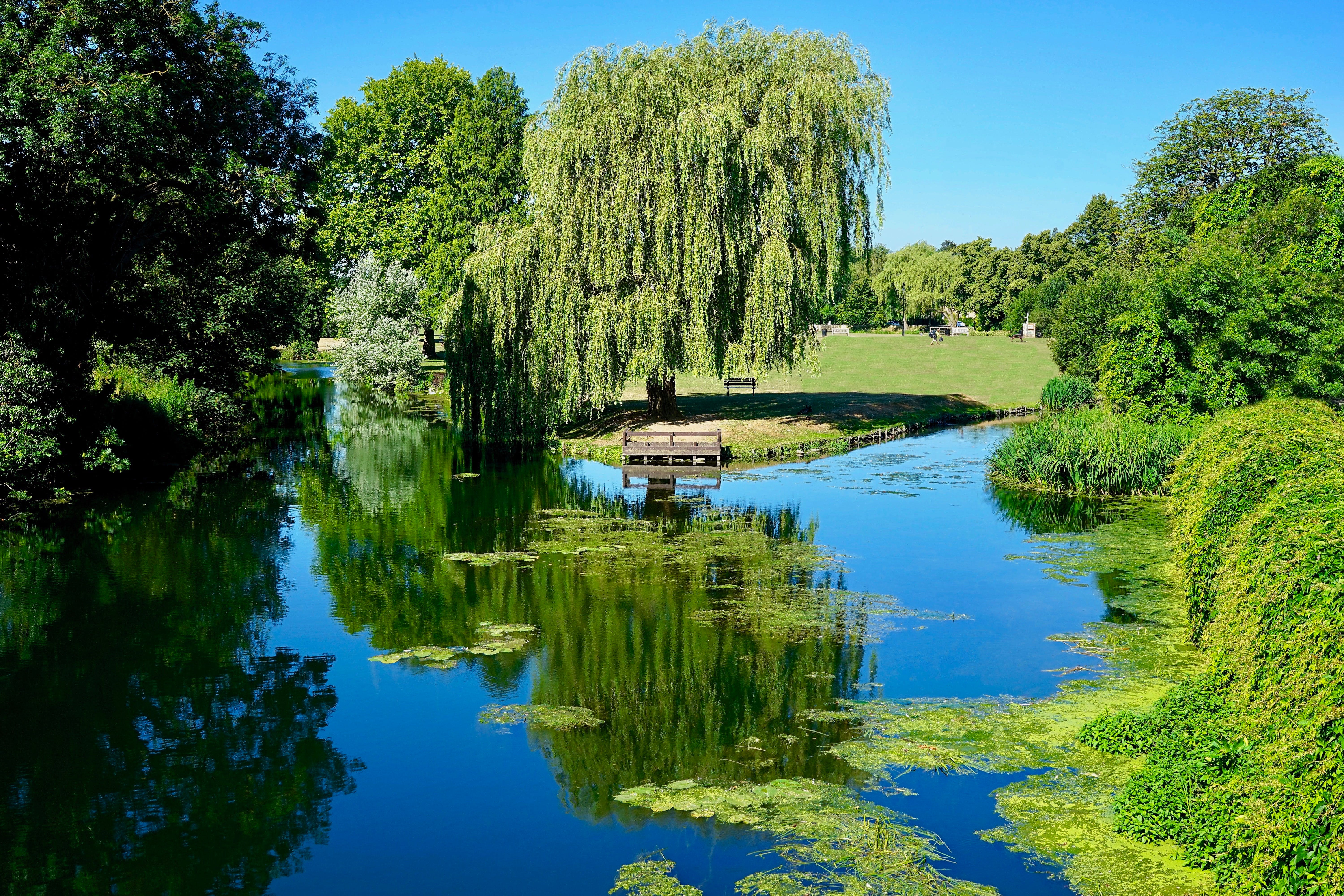 Free stock photo of water, trees, grass, river