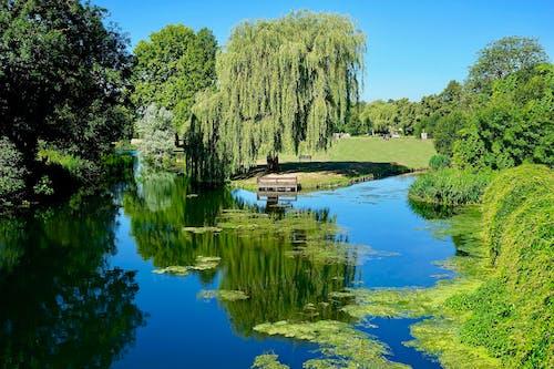Ảnh lưu trữ miễn phí về cây, cỏ, Nước, nước Anh