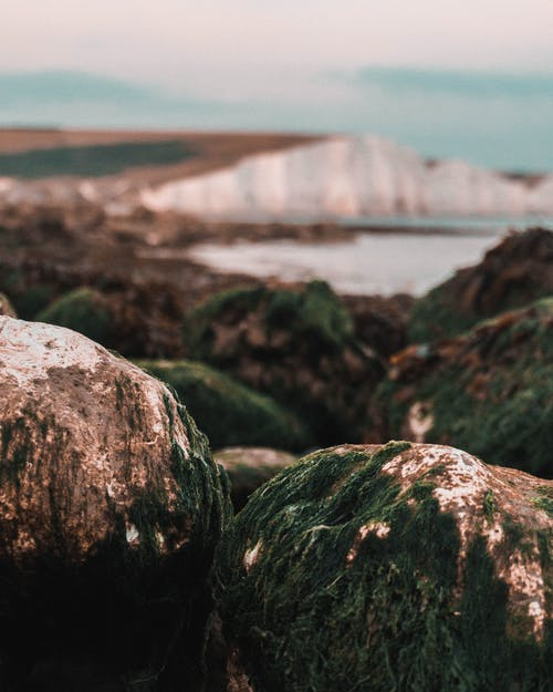 Δωρεάν στοκ φωτογραφιών με ακτή, ακτογραμμή, βράχια σκεπασμένα με βρύα, βρύο