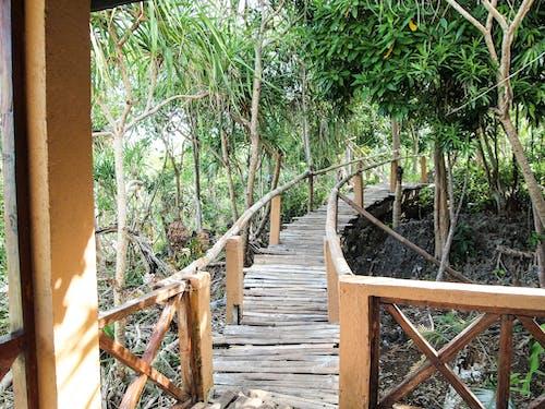 Free stock photo of bridge, journey, summer, vacation
