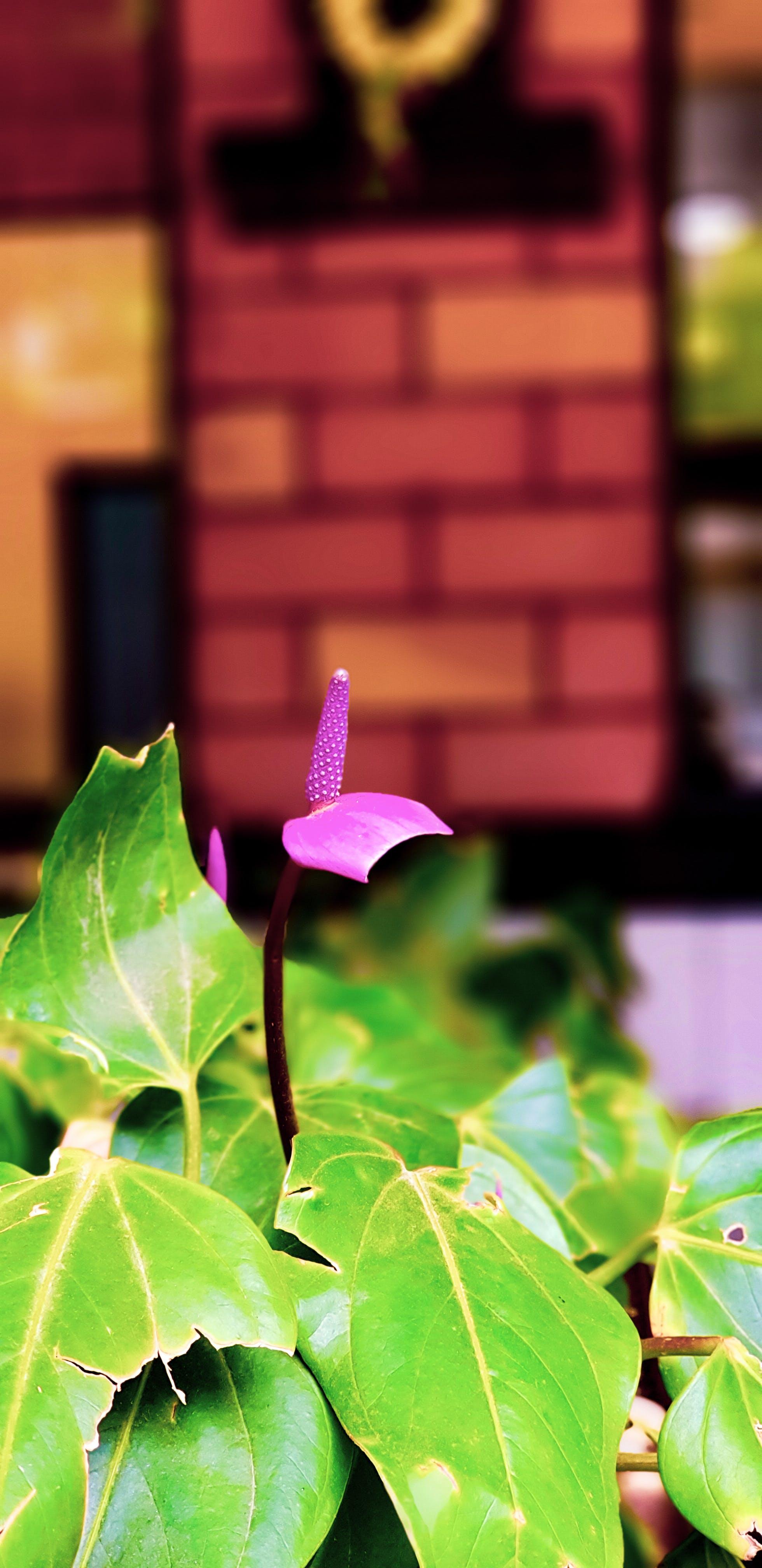 Gratis lagerfoto af blomsterhave, blomstermark, grøn, lilla blomst