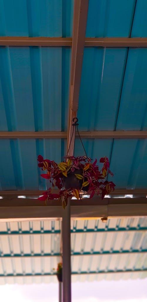 Foto profissional grátis de buquê, flor pendurada, flores bonitas, locais de interesse