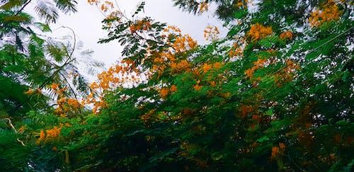 Foto profissional grátis de flores bonitas, fotografia da natureza, jardim de flores, mãe natureza