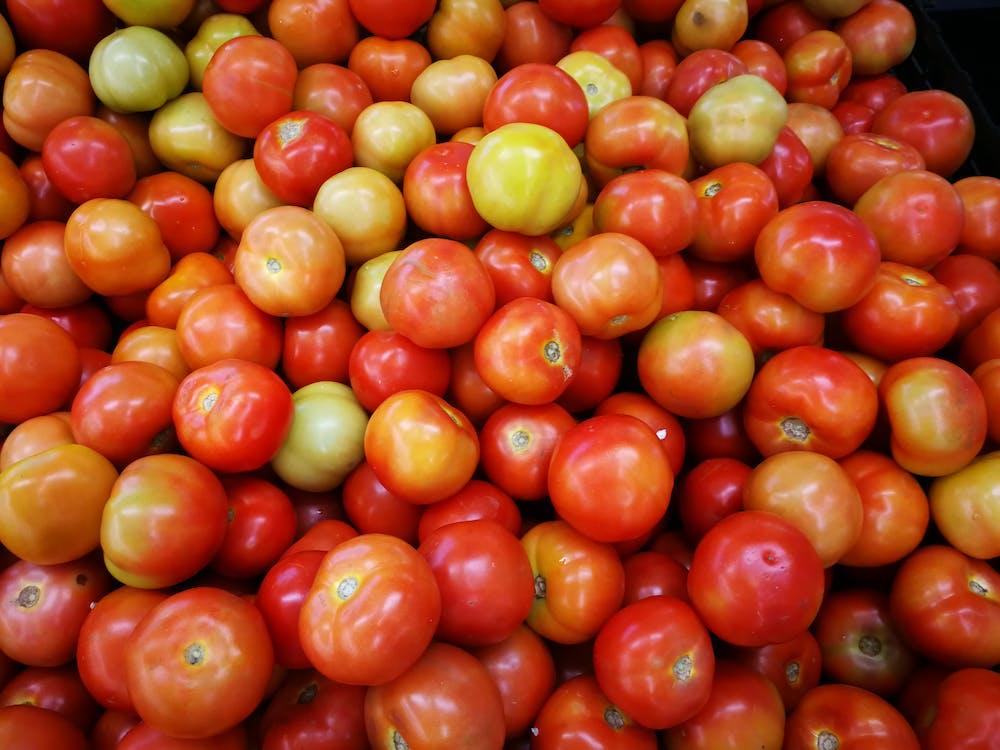 Free stock photo of tomato, tomatoes
