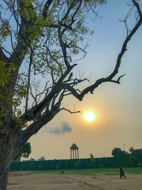 Free stock photo of Adobe Photoshop, canon, evergreen, india