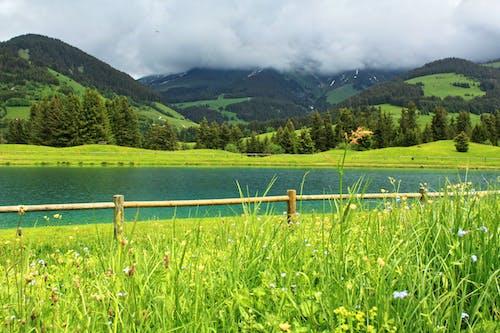 Imagine de stoc gratuită din câmp înverzit, gard de lemn, munte, natură