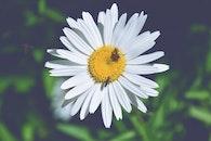 nature, petals, flower
