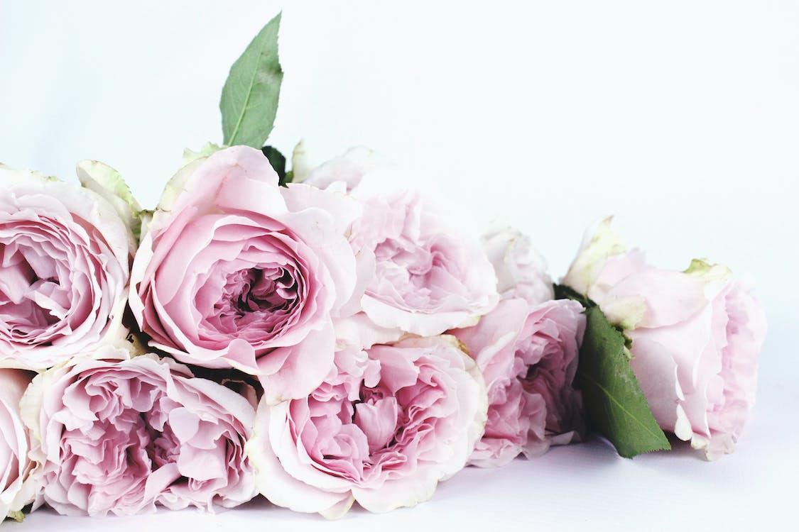 blomster, buket, close-up