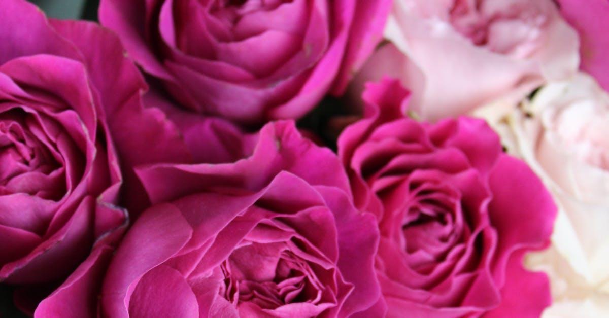 Картинки цветов роз фото, прикольная
