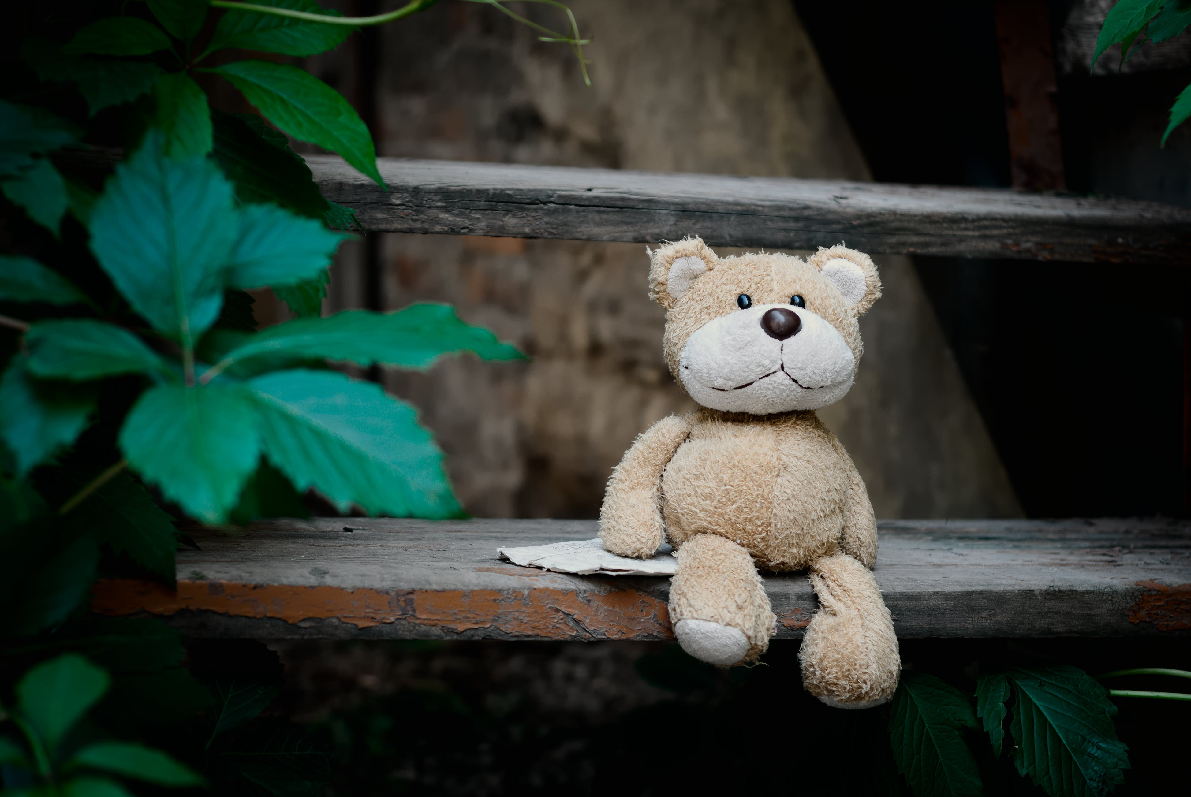 Brown Bear Plush Toy on Wooden Stairs beside Plants