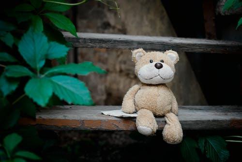 ahşap merdivenler, doldurulmuş oyuncak, gün ışığı, gündüz içeren Ücretsiz stok fotoğraf
