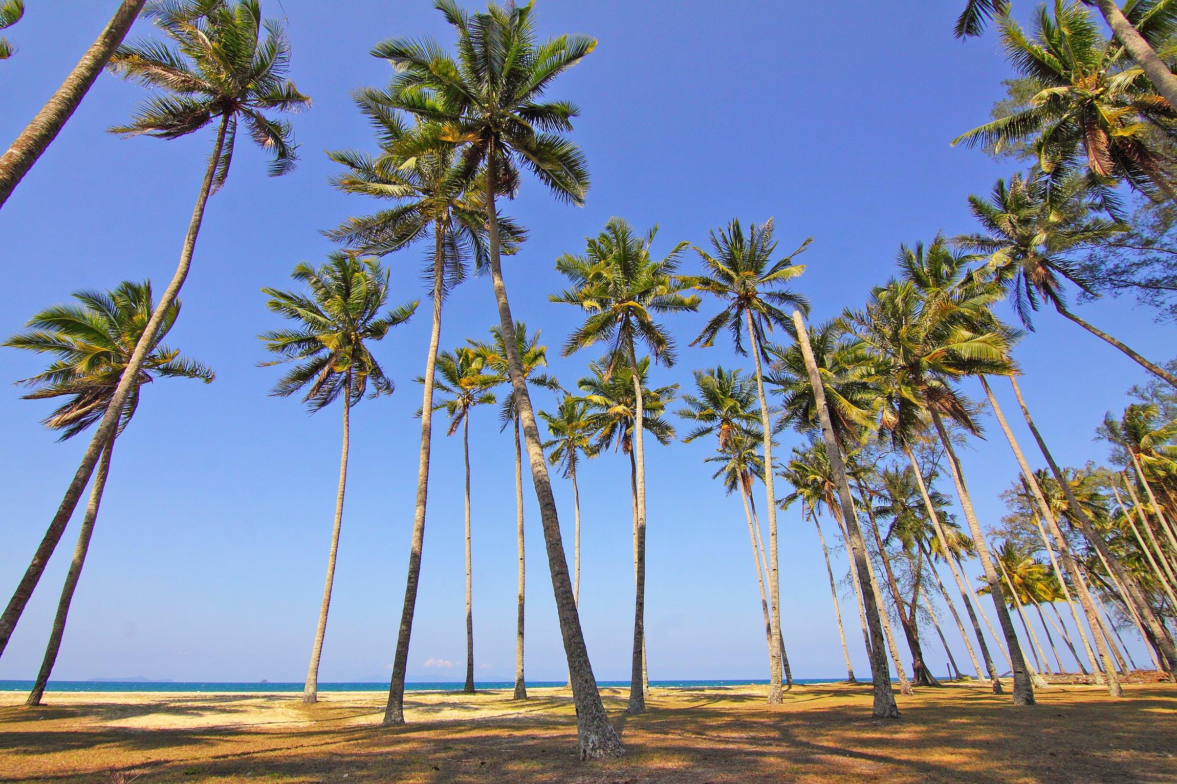 beach, idyllic, island