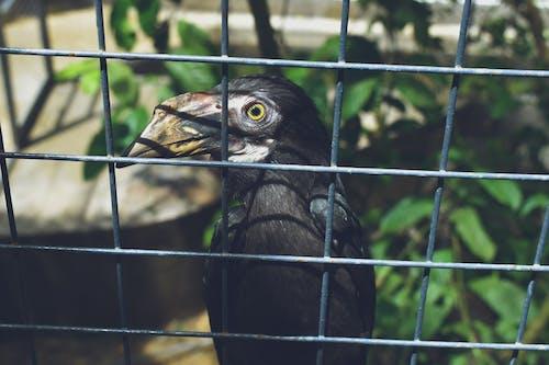Foto profissional grátis de animais selvagens, animal, casa de passarinho, close