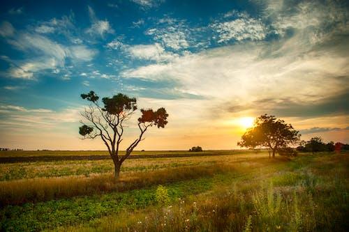 Imagine de stoc gratuită din apus, arbori, câmp, cer înnorat