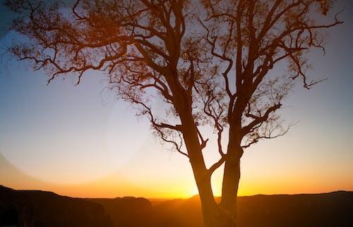 ağaç, akşam, arkadan aydınlatılmış, gün batımı içeren Ücretsiz stok fotoğraf