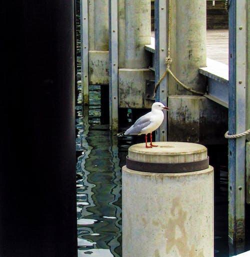 คลังภาพถ่ายฟรี ของ ท่าเรือ, น้ำ, วัน, สะพาน