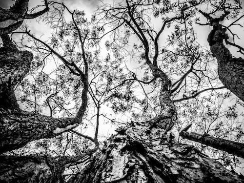 Ảnh lưu trữ miễn phí về #cây, #rừng