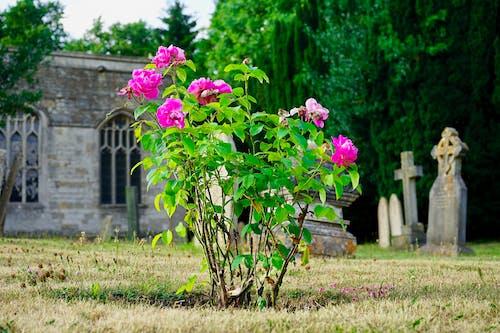 Gratis arkivbilde med blomster, kirkebygning
