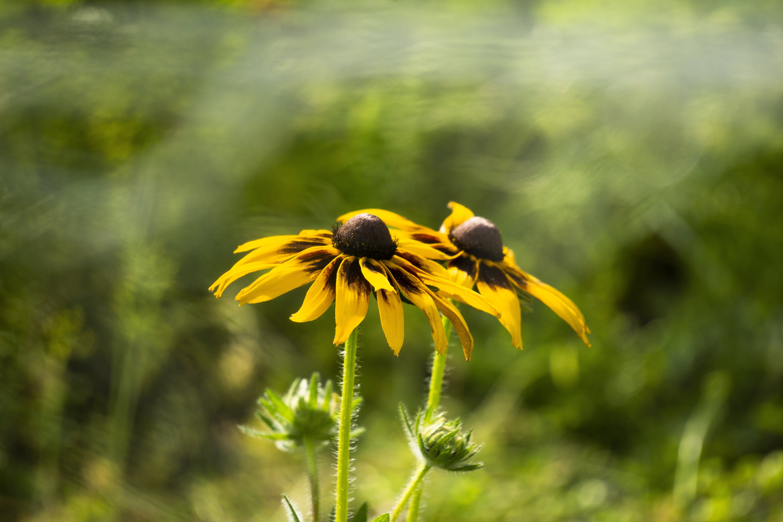 Free stock photo of beautiful, bokeh, daylight, flower