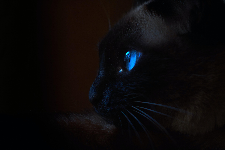 Kostnadsfri bild av #game of thrones, katt, katter