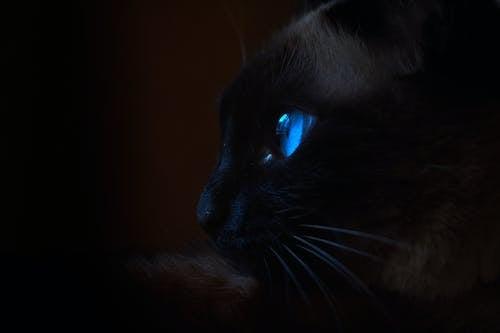 ネコ, 猫, #ゲーム・オブ・スローンズの無料の写真素材