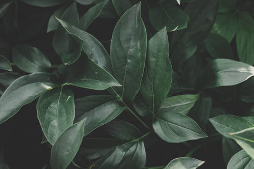 ダーク, 園芸植物, 庭園, 成長の無料の写真素材