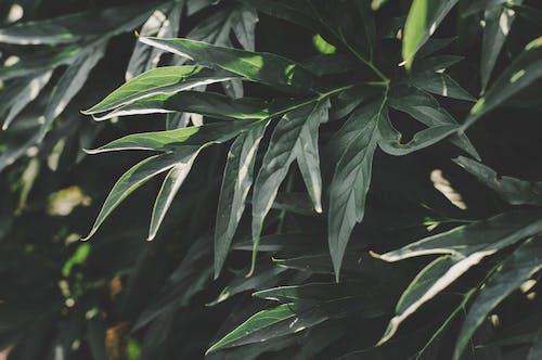 Fotobanka sbezplatnými fotkami na tému čerstvosť, farba, flóra, pestovať