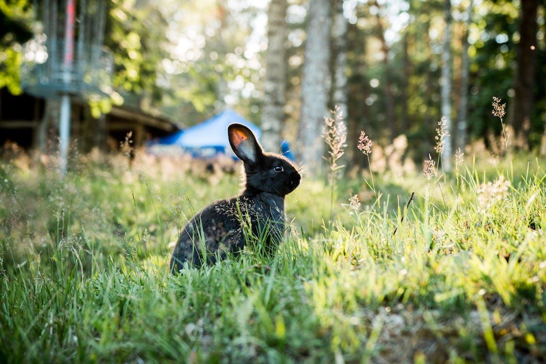 Photo of Black Rabbit