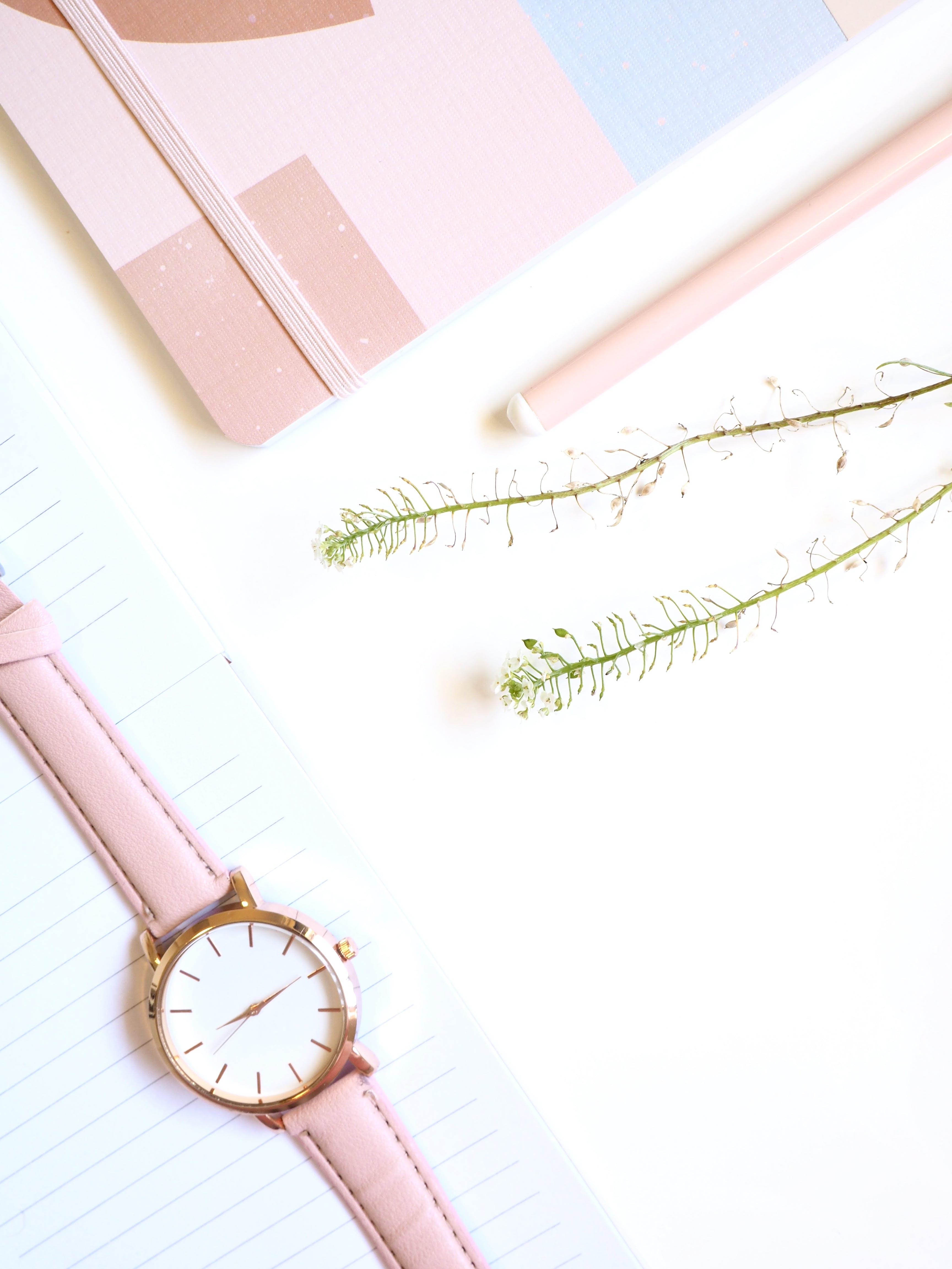 Kostenloses Stock Foto zu blumen, einfach, nahansicht, pink