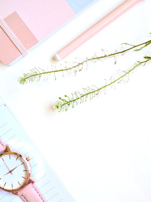 Beyaz arka plan, bitkiler, düz yüzey, izlemek içeren Ücretsiz stok fotoğraf