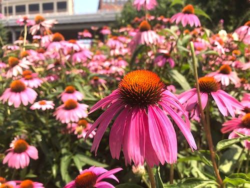 Gratis lagerfoto af baggrund, blomster, blomstrende, Botanisk