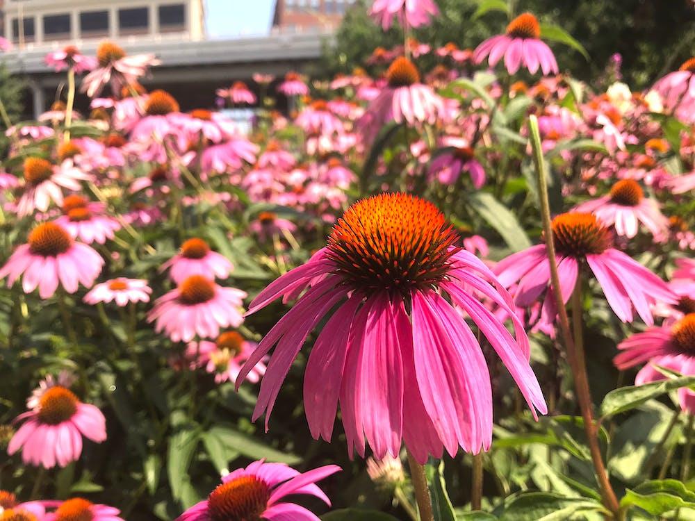 botaniczny, dzień, flora