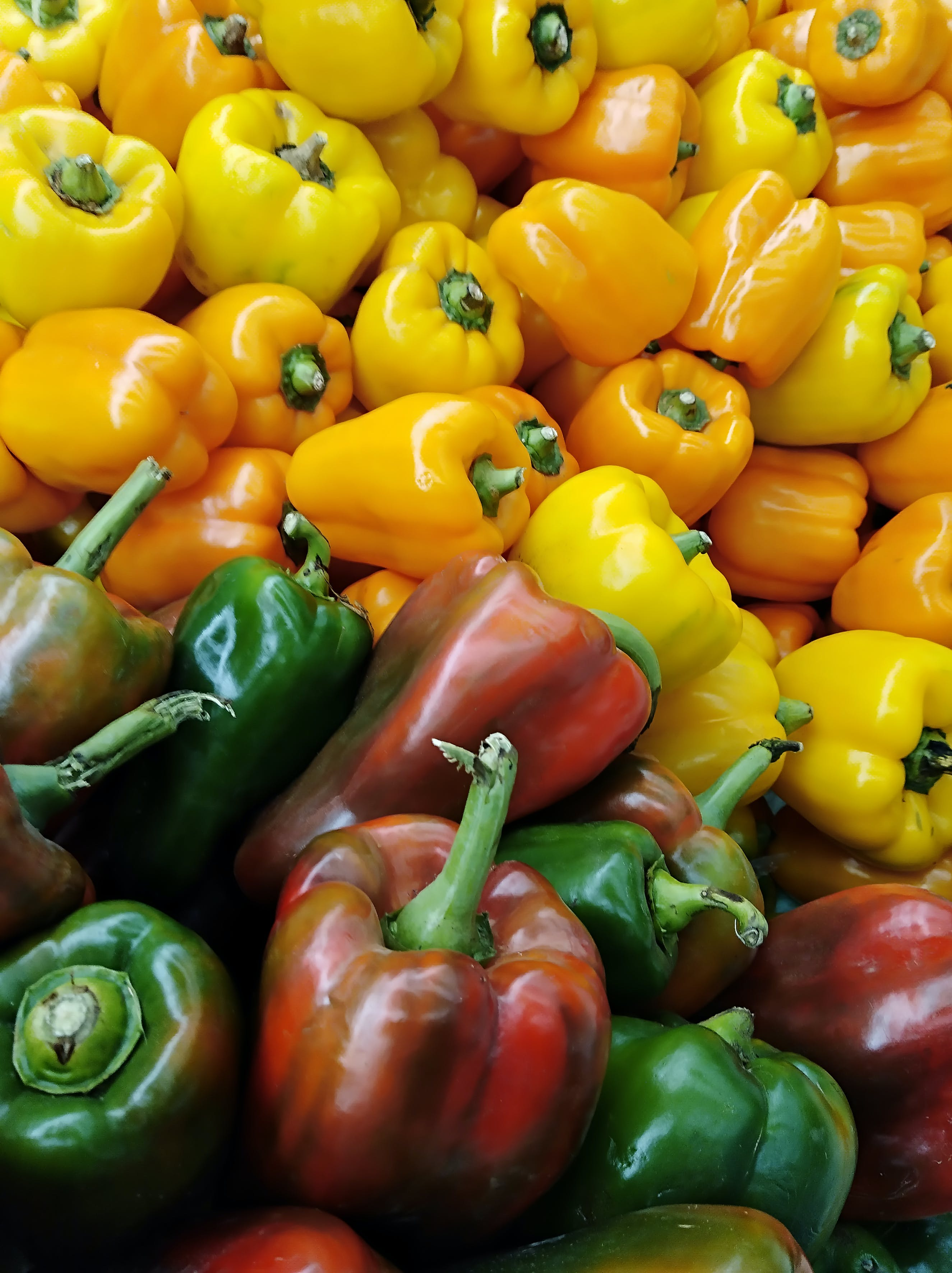 Free stock photo of Amarillo, pimenton, pimientos, rojo