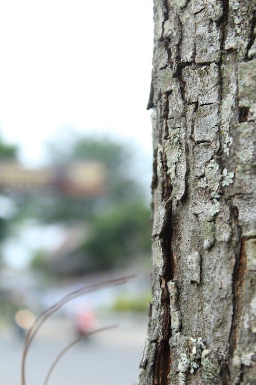 Foto d'estoc gratuïta de barres, fons de pantalla de la natura, natura