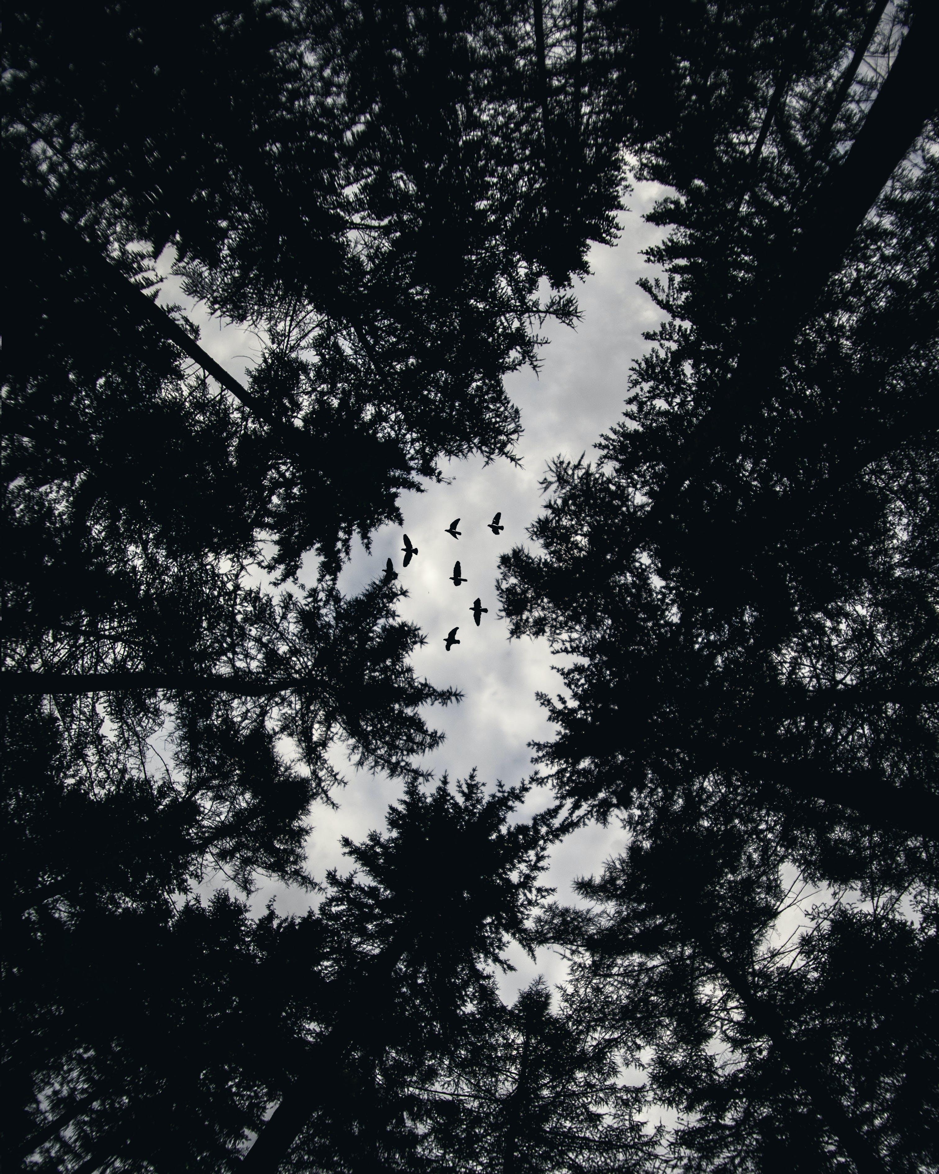 Kostenloses Stock Foto zu äste, bäume, draußen, dunkel