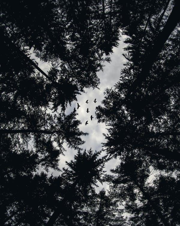 flyve, fotografering fra lav vinkel, fugle