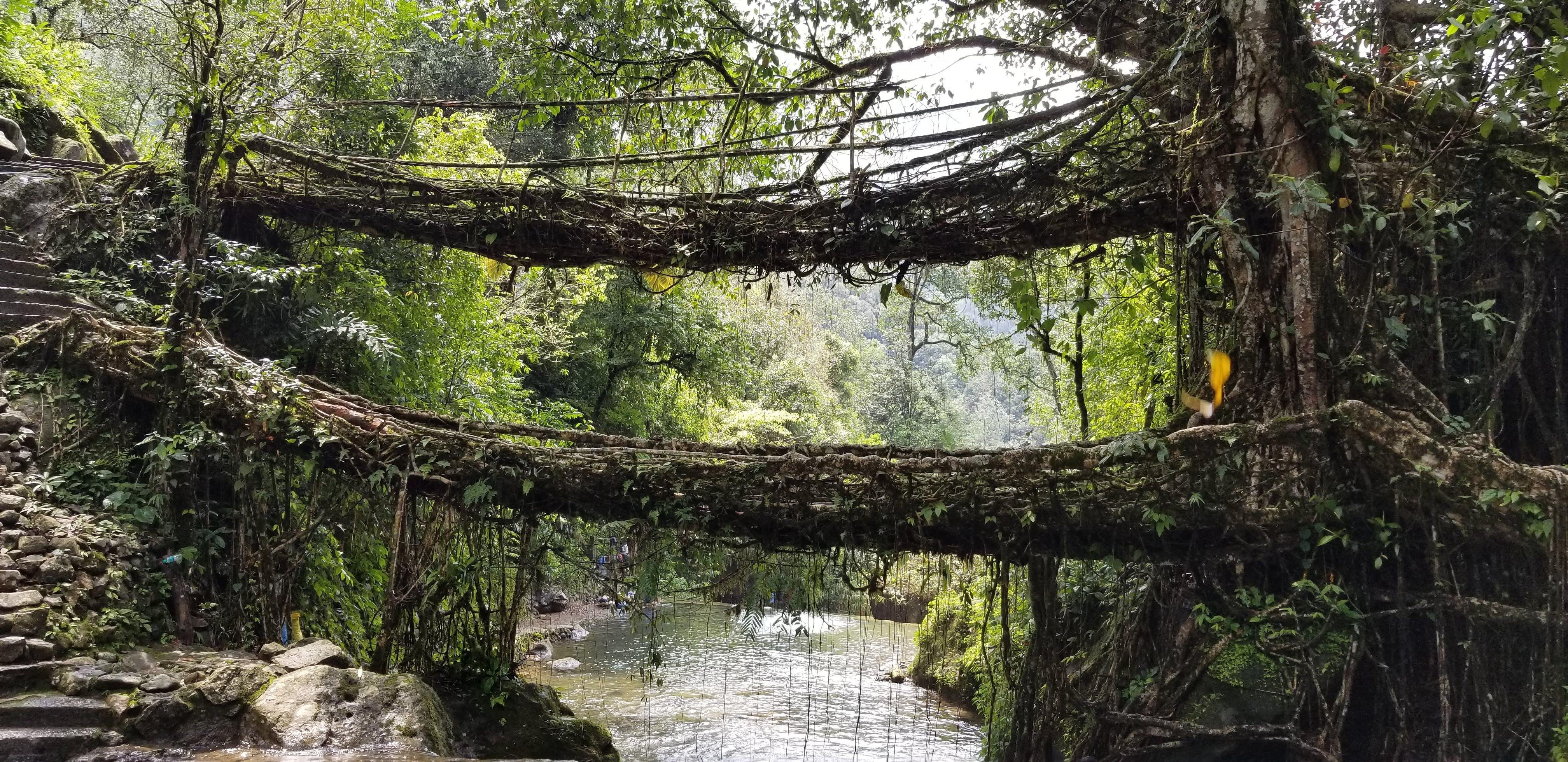 Kostenloses Stock Foto zu doppelte wurzelbrücke