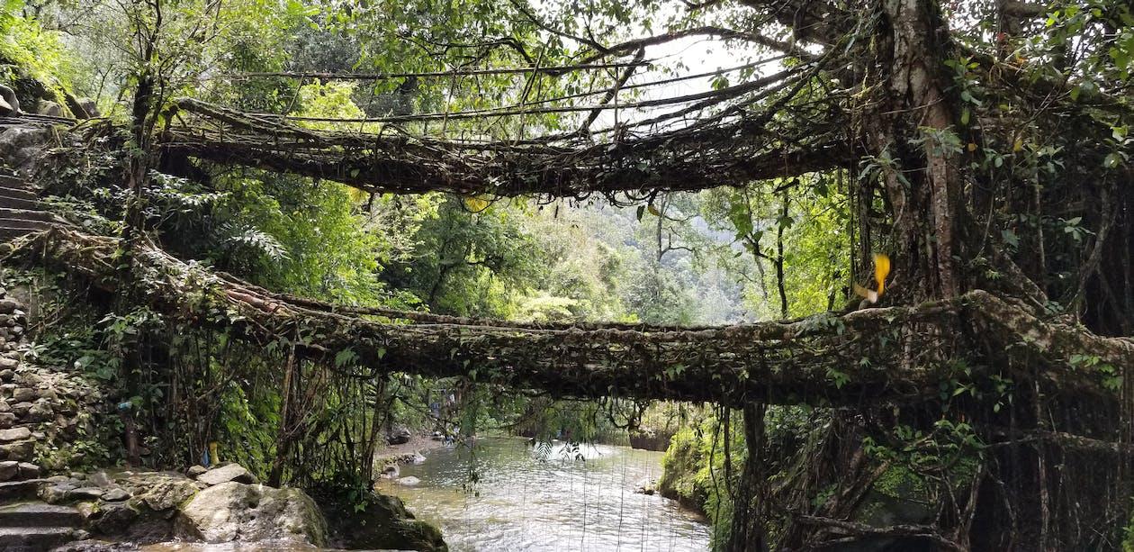 kaksoisjuuren silta