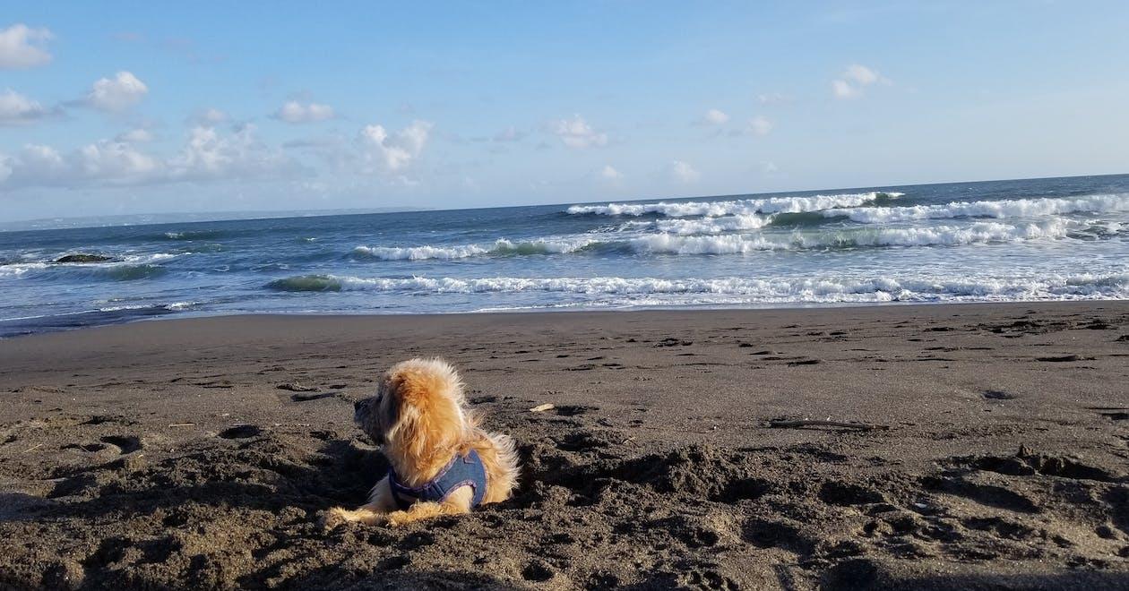 schöner sonnenuntergang strand