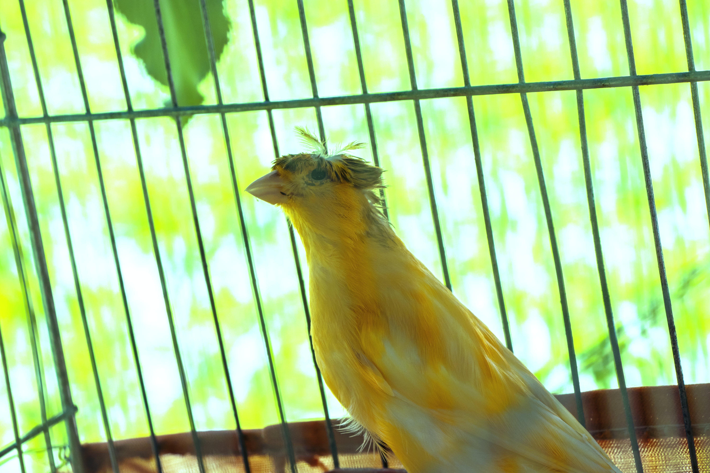 Free stock photo of #bird, #birds, amirghoorchiani, bird feeder