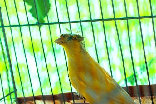Free stock photo of amirghoorchiani, bird, bird feeder, bird house